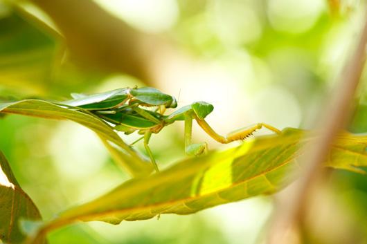 grün infizierte wunden